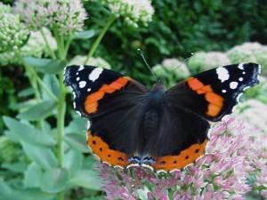 vlinders vijvertuin de waterjuffer vlinders vijvertuin de waterjuffer